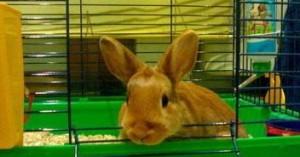 la-mejor-forma-de-limpiar-la-jaula-de-un-conejo_3tuvn