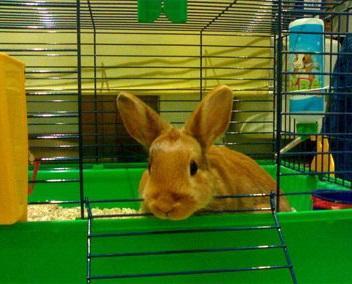 La mejor forma de limpiar la jaula de un conejo