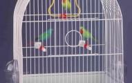 la-mejor-jaula-para-los-canarios_h5br9