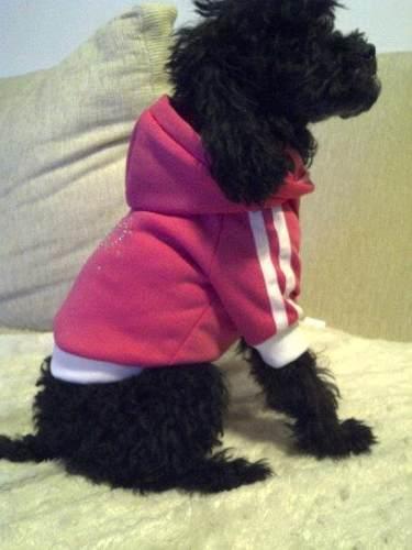 La mejor protección para los perros en época de invierno