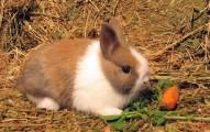 la-verminosis-en-los-conejos_50ofh