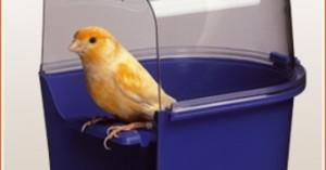 las-aves-la-mejor-mascota-para-los-ancianos_npi0t