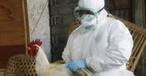 las-aves-y-la-gripe-aviar_5a30c