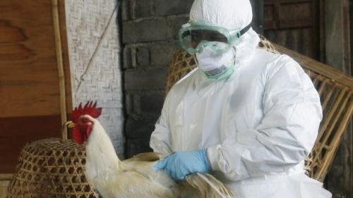 Las aves y la gripe aviar