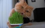 las-bolas-de-pelo-en-los-gatos_ts5q0