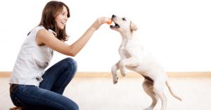 las-claves-mas-importantes-para-educar-a-un-perro_m5jwo