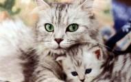 las-gatas-y-su-instinto-maternal_uxwdt