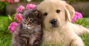 las-mascotas-son-felices-si-cumples-algunos-tips_3ubv5