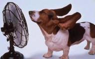 las-mascotas-y-el-calor_j8oxn