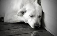 las-mascotas-y-la-soledad_2bc6l