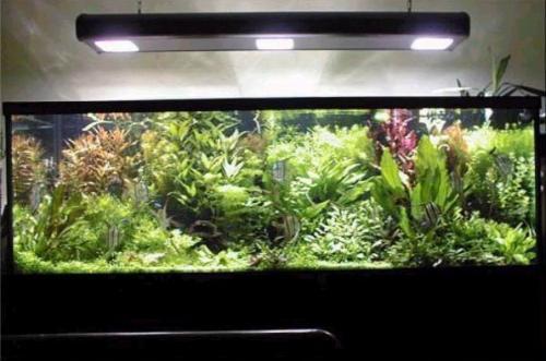 Las mejores plantas para el acuario canal mascotas for Mejores peces para acuario