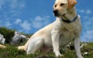 las-razas-de-perros-mas-inteligentes_s1lx8