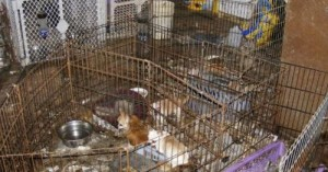 las-terribles-fabricas-de-mascotas_v016f