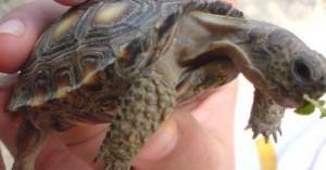 las-tortugas-y-la-salmonela_xto5d