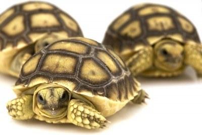Las tortugas y sus enfermedades