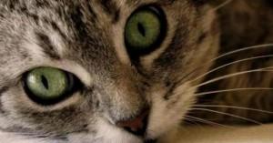lavando-los-ojos-del-gato_a56x9