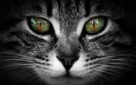 lenguaje-de-las-miradas-de-los-gatos_gp8fa