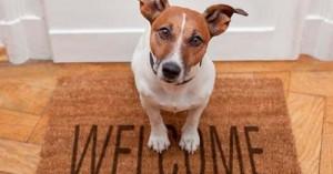 llegada-de-la-nueva-mascota-en-el-hogar_shli5