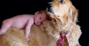 llegada-del-bebe-a-casa-relacion-perros-y-ninos_85fy1