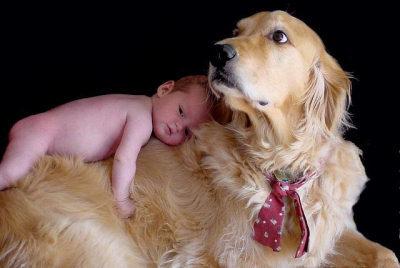 Llegada del bebé a casa: relación perros y niños