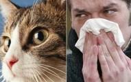 lo-mejor-para-evitar-la-alergia-a-las-mascotas_8awsu