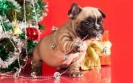lo-mejor-para-las-mascotas-en-navidad_an2s9
