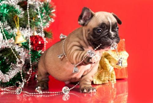 Lo mejor para las mascotas en Navidad