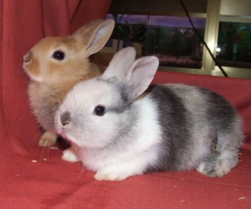 Lo mejor para un conejo enano