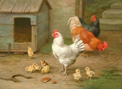 Lo que debemos saber sobre las gallinas
