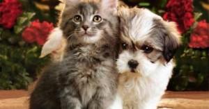 logra-que-tu-perro-conviva-con-otras-especies_6vyxp