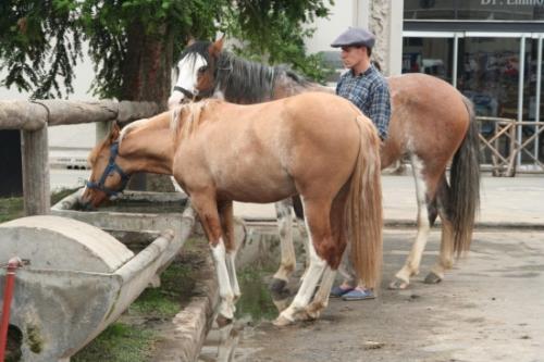 Los caballos y el verano