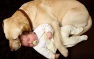 los-celos-de-la-mascota-frente-al-nuevo-bebe_kw4ot