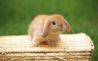 los-conejos-belier_m62fb