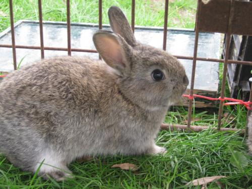 Cómo criar un conejo en casa