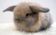los-conejos-enanos-y-los-males-mas-comunes_0p9ew