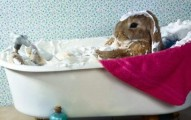 los-conejos-y-el-bano_738hz