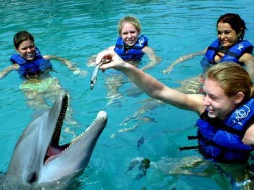 Los delfines y su alimentación