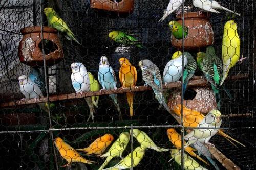 Los diferentes tipos de aves y sus características