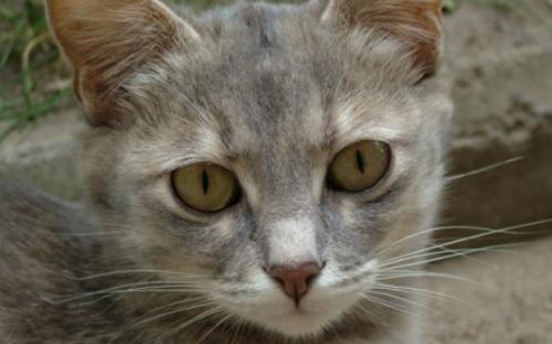 Los estornudos de los gatos