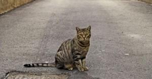 los-gatos-acostumbran-alejarse-del-hogar_wms4z