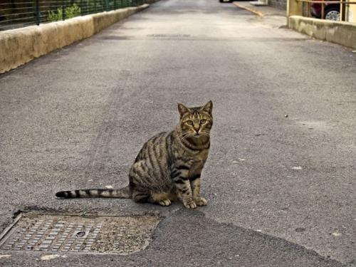 Los gatos acostumbran alejarse del hogar
