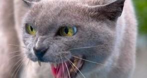 los-gatos-con-sindrome-de-hiperestesia_9rm3j
