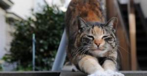 los-gatos-debes-hacer-ejercicios_u5gxk
