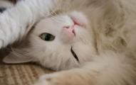 los-gatos-excelentes-mascotas-y-companeros_sz6nd
