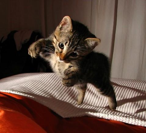 ¿Los gatos son resistentes a las caídas?