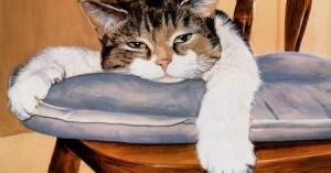 los-gatos-y-la-anemia_164s2