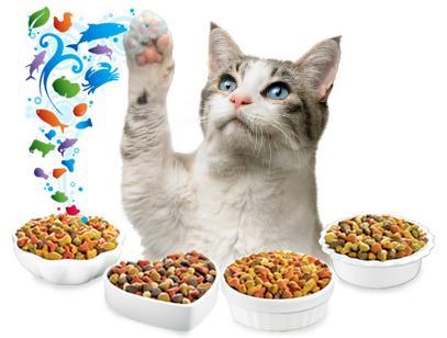 Los gatos y las vitaminas para su salud