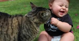 los-gatos-y-los-bebes_v8ycf