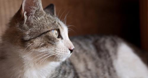 Los gatos y su buena memoria