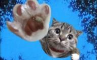 los-gatos-y-sus-caidas_7bs1w